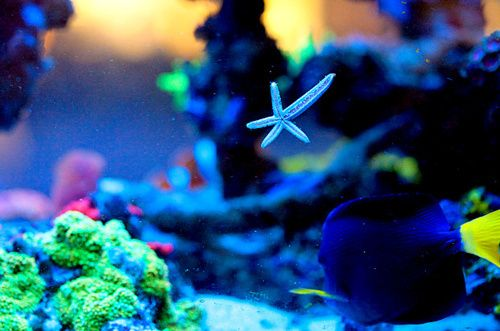 Neon fish tanks