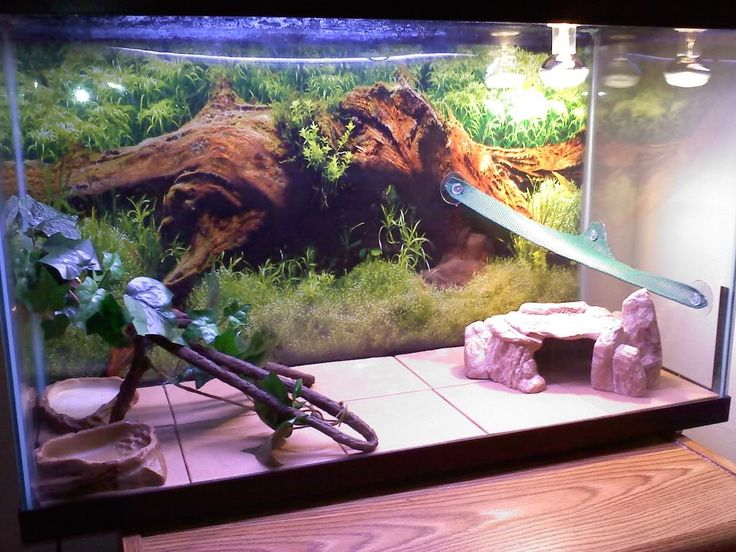 how to clean a bearded dragon tank
