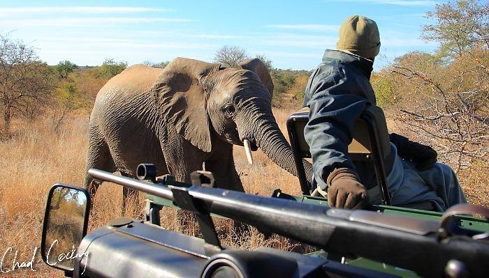 Curious elephant.