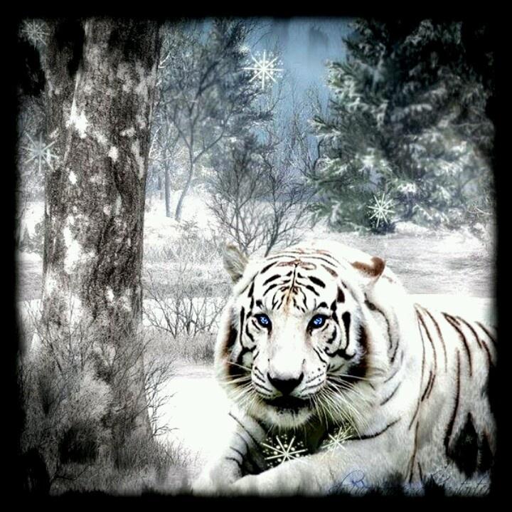 Beautiful White Tiger | Wild Animals & Wings | Pinterest