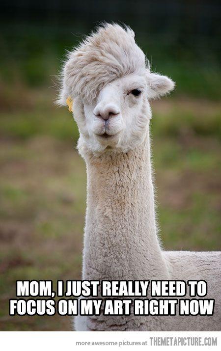 misunderstood hipster alpaca :)
