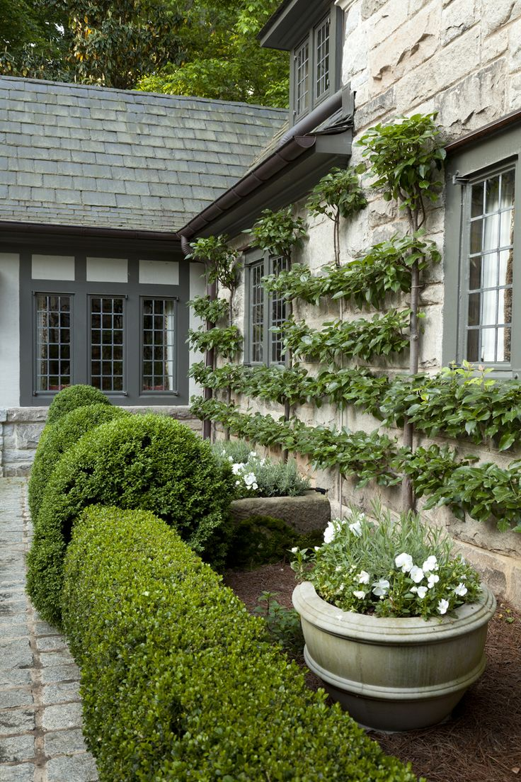 Landscaping With Pear Trees : Pear tree espalier in a garden by howard design studio