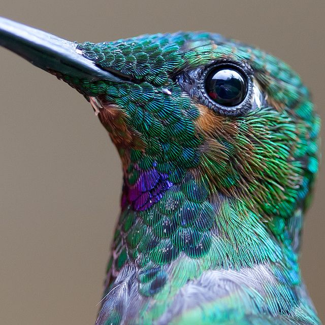 Hummingbird - look at those colors!