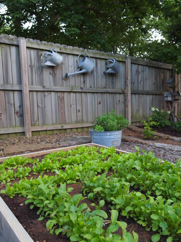 Raised vegetable bed with galvanized watering cans hanging from fence ...