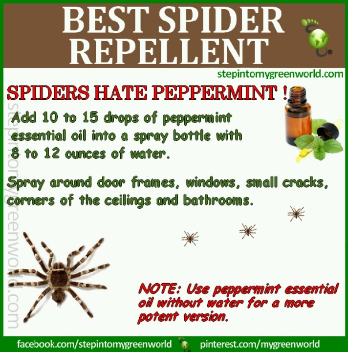 Spider repellent home decor improvement pinterest for How to stop spiders coming in your home