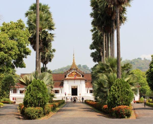 Hai hàng cây Thốt Nốt được trồng hai bên lối vào Bảo Tàng