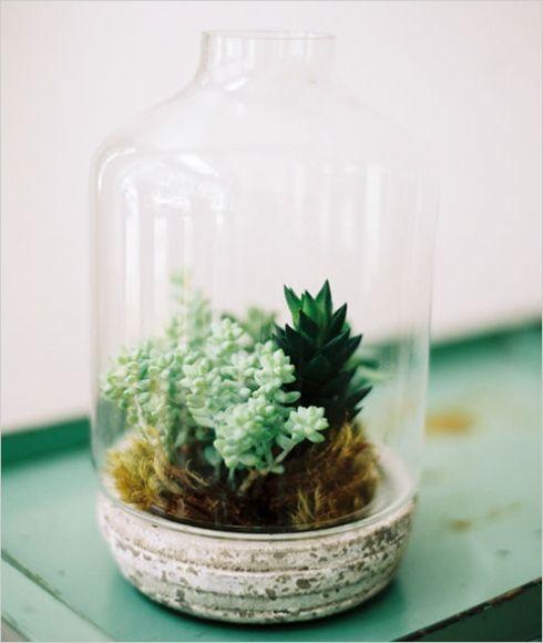Plantes grasses sous cloche verre mini jadin d for Cloche verre decorative