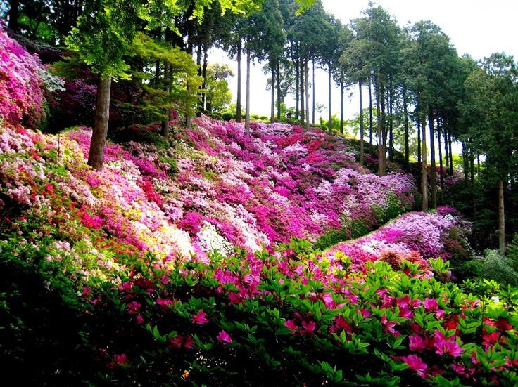 Japanese hillside garden flower photos pinterest for Plants found in japanese gardens