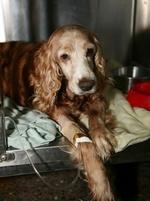 Dog sick after eating jerky treats so sad i am weary of food nail