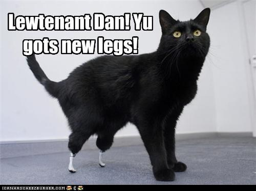Funny Cat Pictures Classic Lolcat