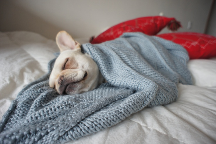 Knitting Patterns For Dogs Blankets : French Bulldog Knit Blanket for Dogs Handmade Lap Afghan