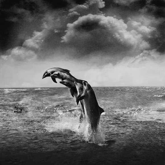 DOLPHIN JUMP ️ | Sea life | Pinterest