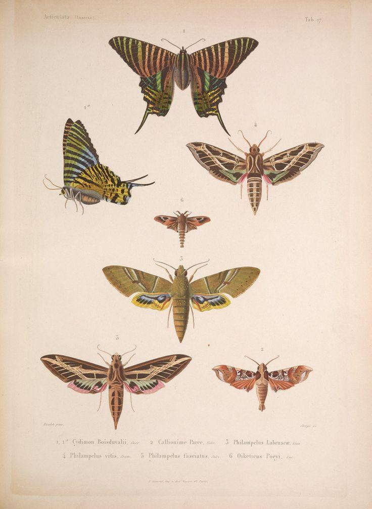 cuban butterflies