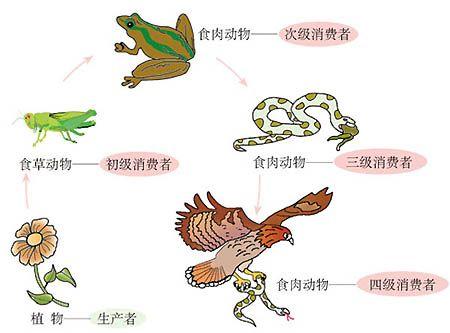 Food Chain | Animals - land 动物 | Pinterest