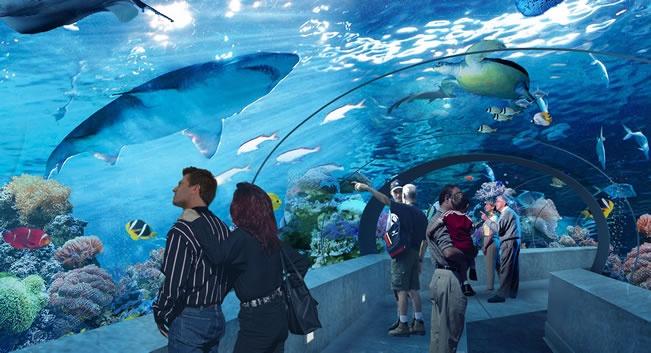Najpoznatiji akvariji u svijetu C7bc332e85bd2a683db93d42f5f339bb