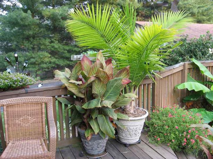 Small Space Garden With Palm Tree Perfect Spaces Places