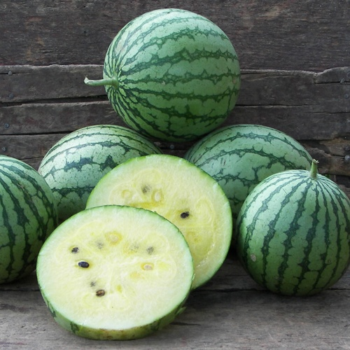 Petite Yellow Watermelon. compact heirloom.