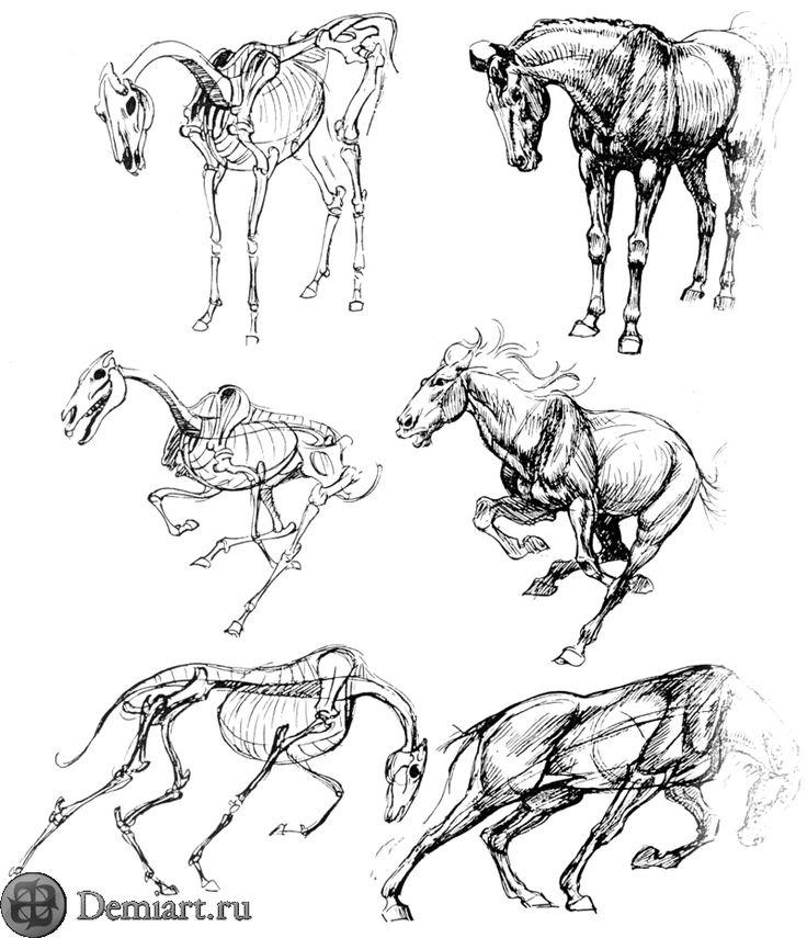 Horse anatomy diagram