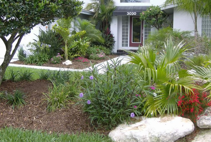 Pin by valerie crown on deer proof plants srubs pinterest for Florida landscape ideas front yard