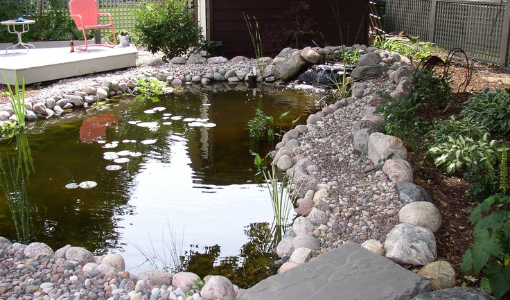 backyard duck pond bing images ducks pinterest