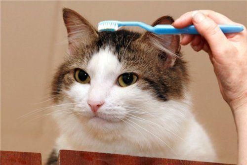 diy cat collars