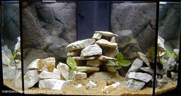Pin by lindsay chase on ideas for salt water tank pinterest for 55 gallon aquarium decoration ideas