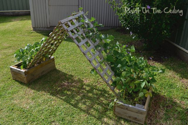 A bean hut...a fun way to garden and a cool place to play for the kids.