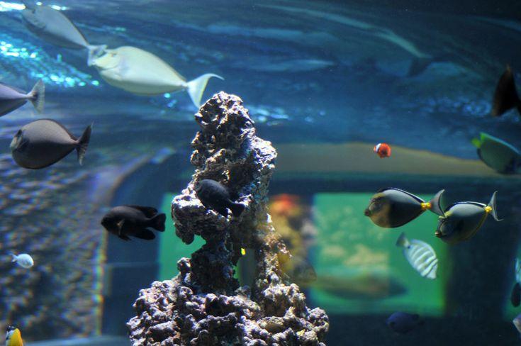 The Bergen Aquarium Aquatic Animals Pinterest