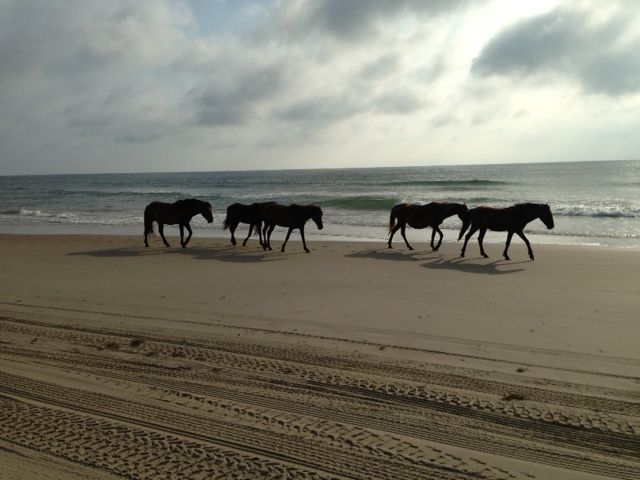 The Outer Banks at North Swan Beach!