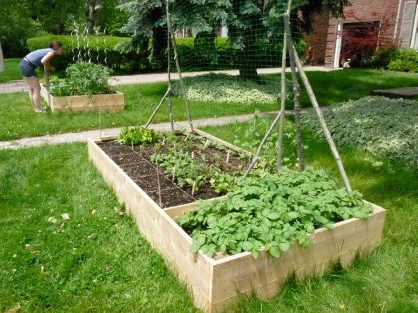 Backyard Urban Farm Company : Pin by BUFCO on BUFCO (Backyard Urban Farm Company)  Pinterest