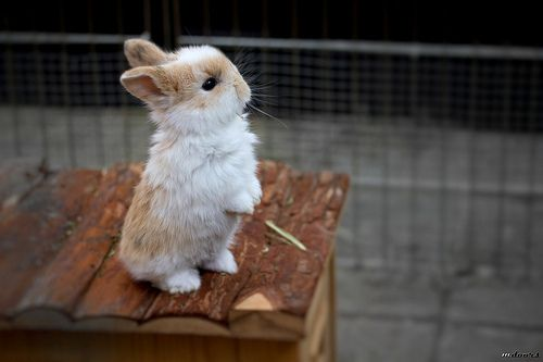 wittle bunny!
