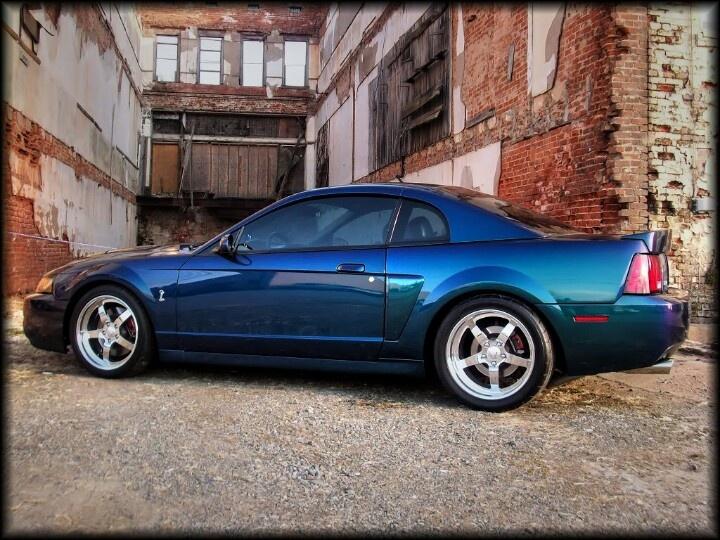 Mystic Snake 03 04 Ford Mustang Cobra Pinterest