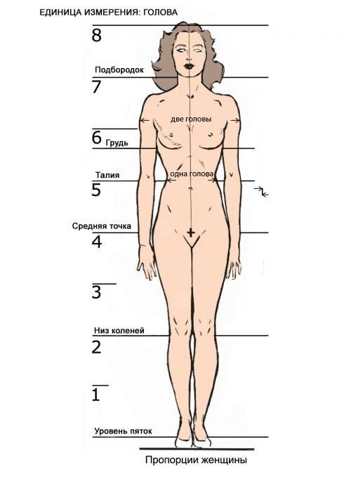размеры тела человека: