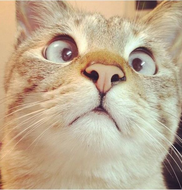 Funny looking cat :-) ...