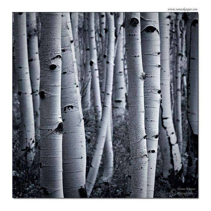 Forest eyes by ~tomaskaspar on deviantART
