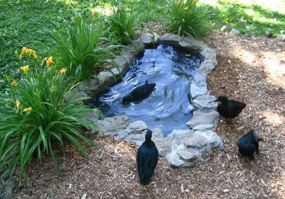Making A Backyard Duck Pond : Very nice, water pond for ducks  Lucky Ducks  Pinterest