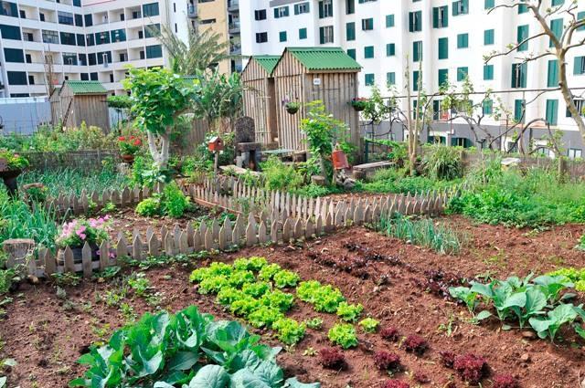 Rooftop Vegetable Gardens : Roof top vegetable garden!  ROOF GARDEN  Pinterest