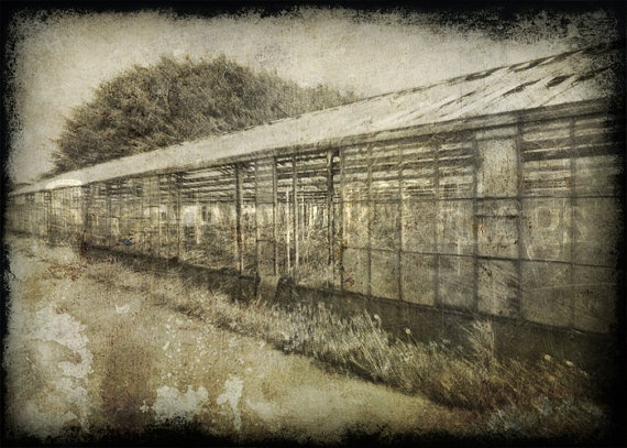 Old deserted Victorian-era greenhouse. | Steampunk Things | Pinterest: pinterest.com/pin/3518505928580413
