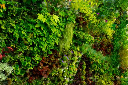 Pin by samuel smith on vertical gardens pinterest for Green wall vancouver