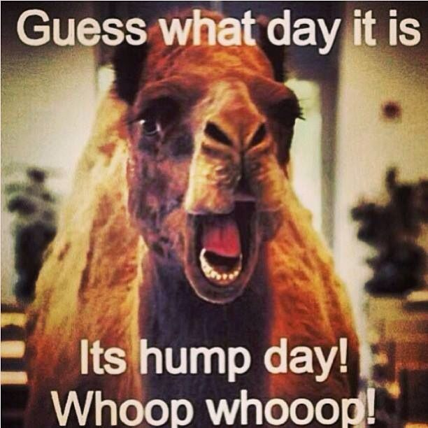 hump day almost over cant wait till next wensday when you can here every one in my school go up an down the halls going hump day oh good times!!!