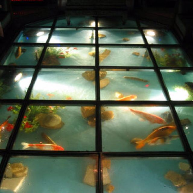 Glass floor with fish fish in my floor pinterest for Floor fish tank