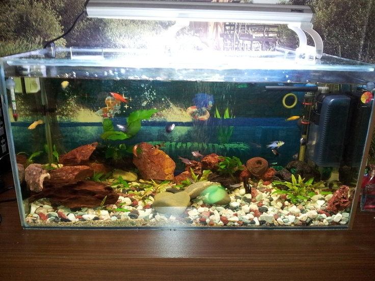 new picture of my tropical fish tank Fish Pinterest