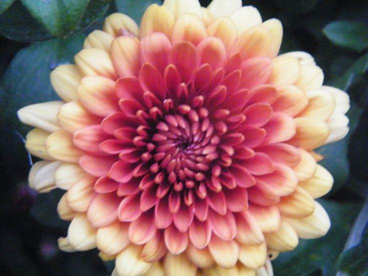 November Birth Flower Tattoo Chrysanthemum Tattoos