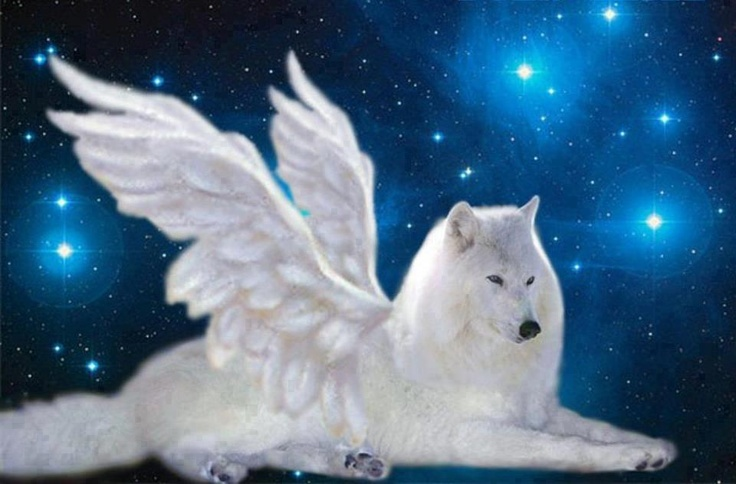 Wolf With Wings | Animals | Pinterest
