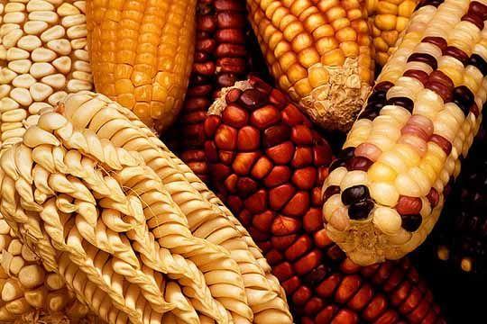 genetically engineered food alert:
