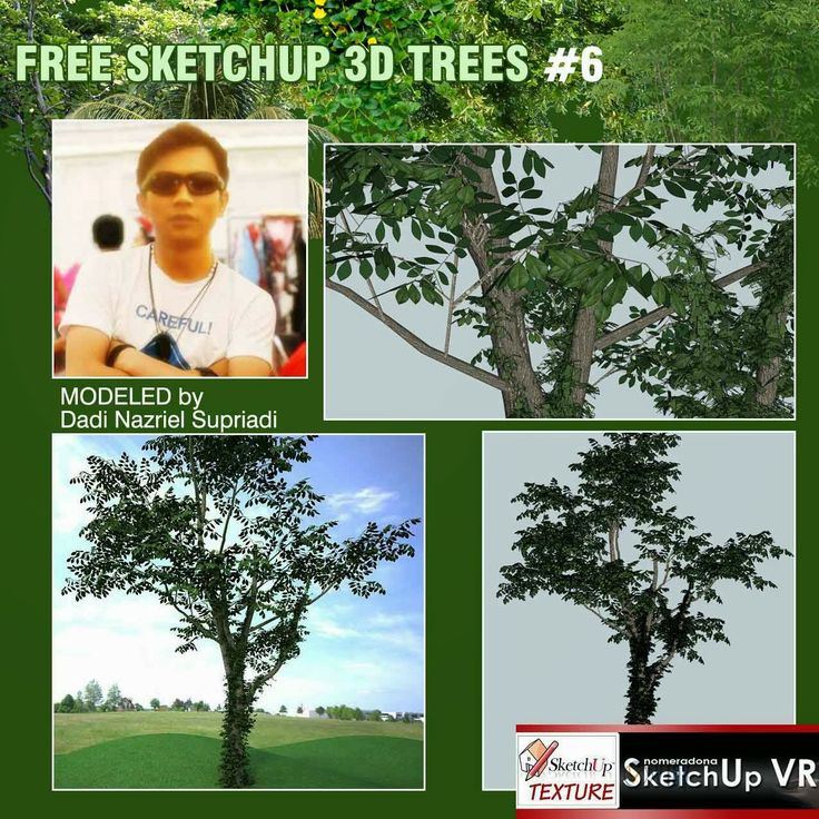 SKETCHUP TEXTURE: FREE SKETCHUP 3D MODEL TREE #6: www.pinterest.com/pin/499688521128309054