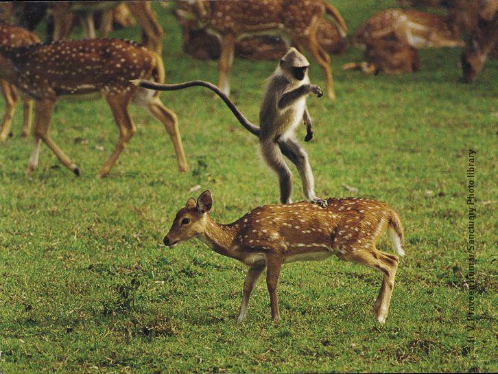Image Result For Predators