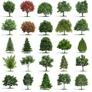 Realistic trees vector landscape and gardening pinterest for Landscape trees