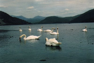 wild swans at coole essay