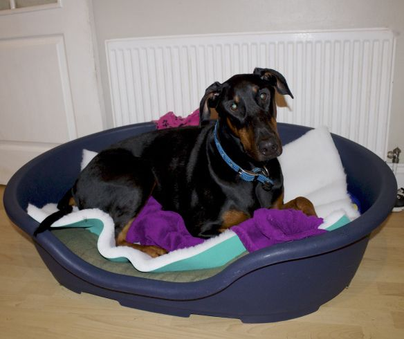 vet bed is quick drying ideal for whelping older dogs